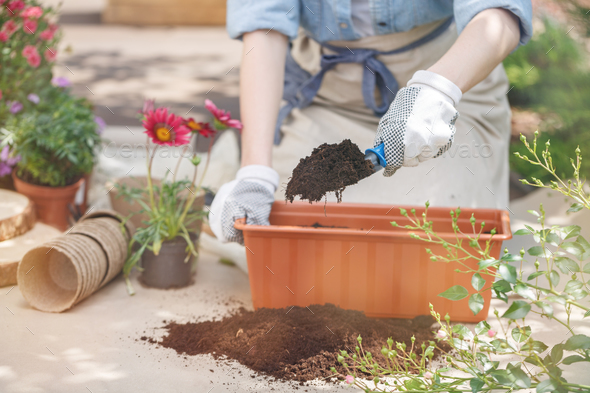 Close-up of gardener's hands - Stock Photo - Images
