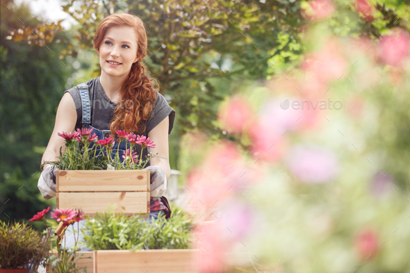 Crates with pink flowers - Stock Photo - Images