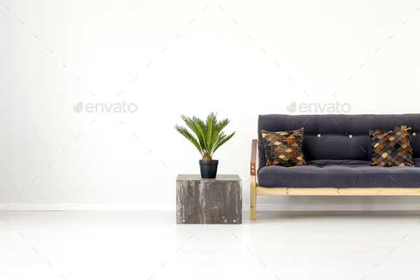 Plant in living room interior - Stock Photo - Images