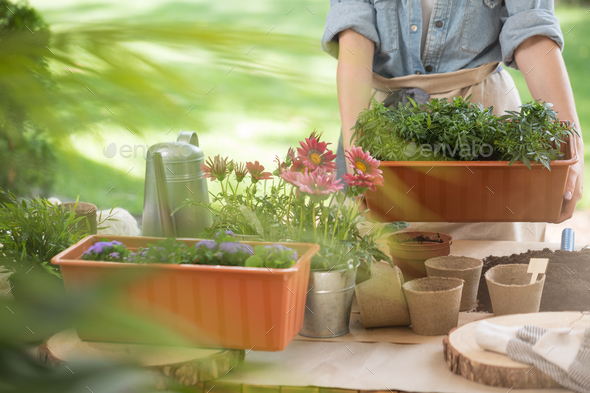 Watering can and flower pots - Stock Photo - Images