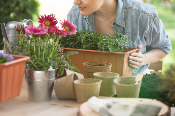 Woman preparing flowers for planting - Stock Photo - Images