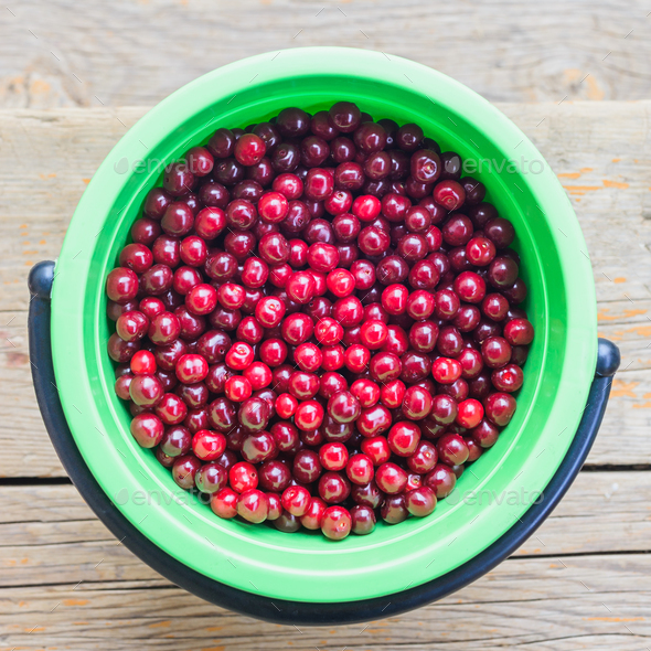 harvest of cherry - Stock Photo - Images