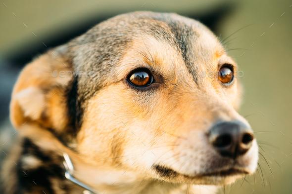 Brown Dog Head Close Up Portrait - Stock Photo - Images