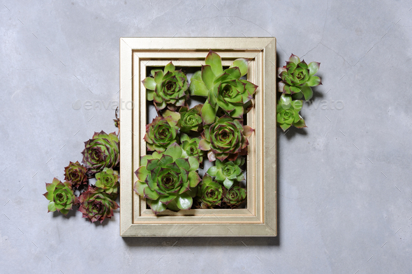 succulent plants decoration - Stock Photo - Images
