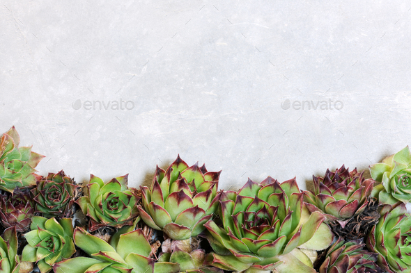 background with succulent plants - Stock Photo - Images