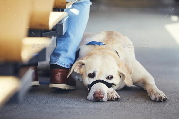 Travel with dog by public transportation - Stock Photo - Images