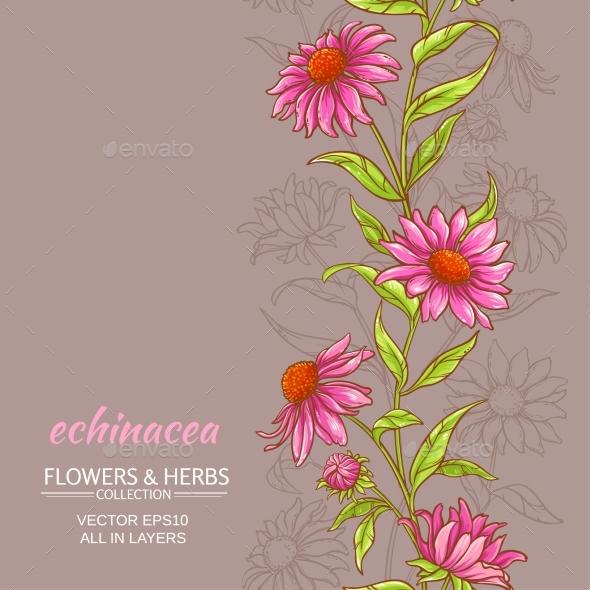 Echinace Purpurea Vector Background - Flowers & Plants Nature