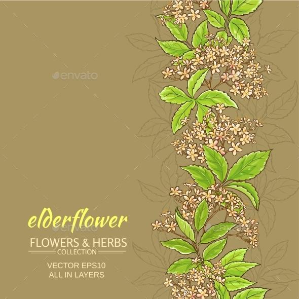 Elderflower Vector Background - Flowers & Plants Nature