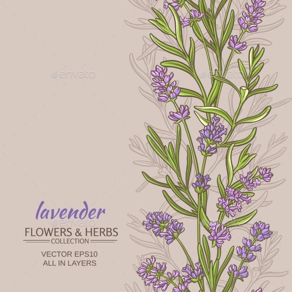 Lavender Vector  Background - Flowers & Plants Nature
