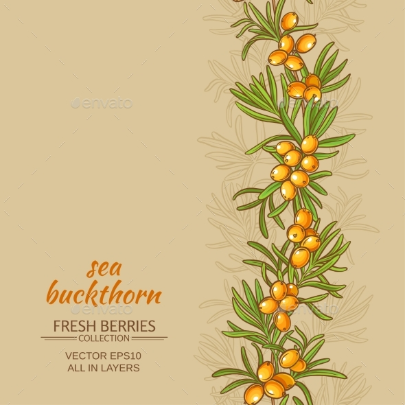Sea Buckthorn Vector Background - Food Objects