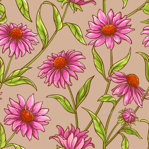 Echinacea Purpurea Pattern - Flowers & Plants Nature