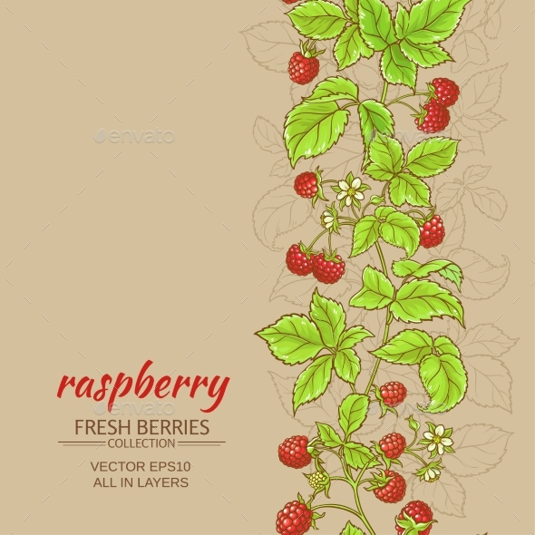 Raspberry Vector Background - Food Objects