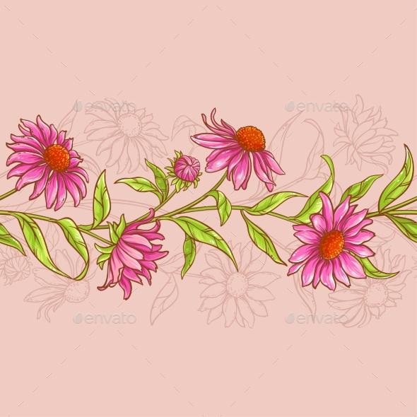 Echinacea Purpurea Pattern - Flowers & Plants Nature