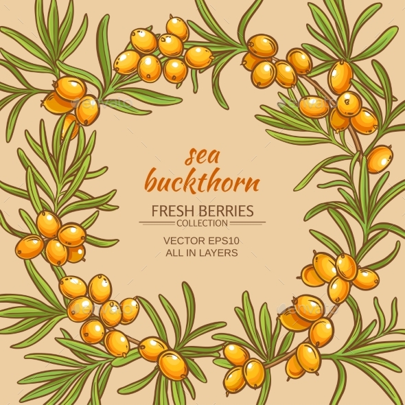 Sea Buckthorn Vector Frame - Food Objects