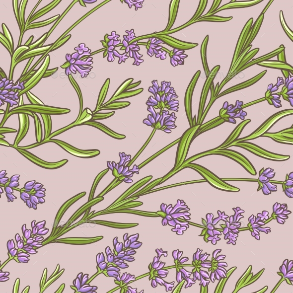 Lavender Vector  Pattern - Health/Medicine Conceptual