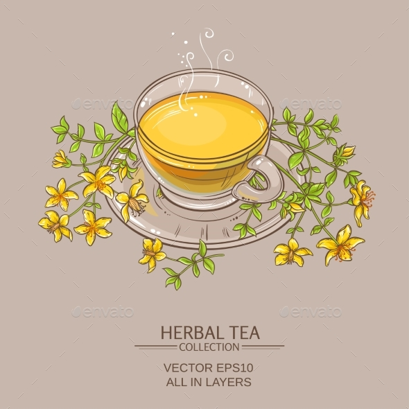 Cup of Tutsan Tea  Vector Illustration - Food Objects