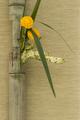 Japanese flower arrangement in bamboo - PhotoDune Item for Sale
