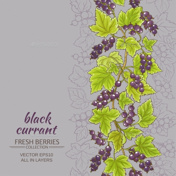 Black Currant  Vector Background - Food Objects