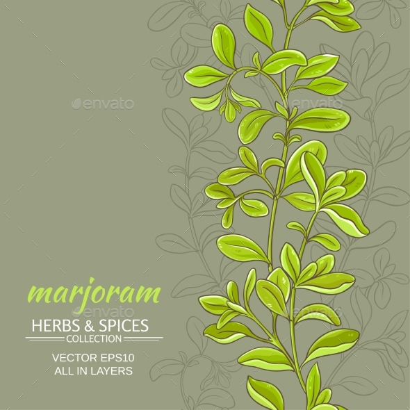 Marjoram Vector Background - Food Objects
