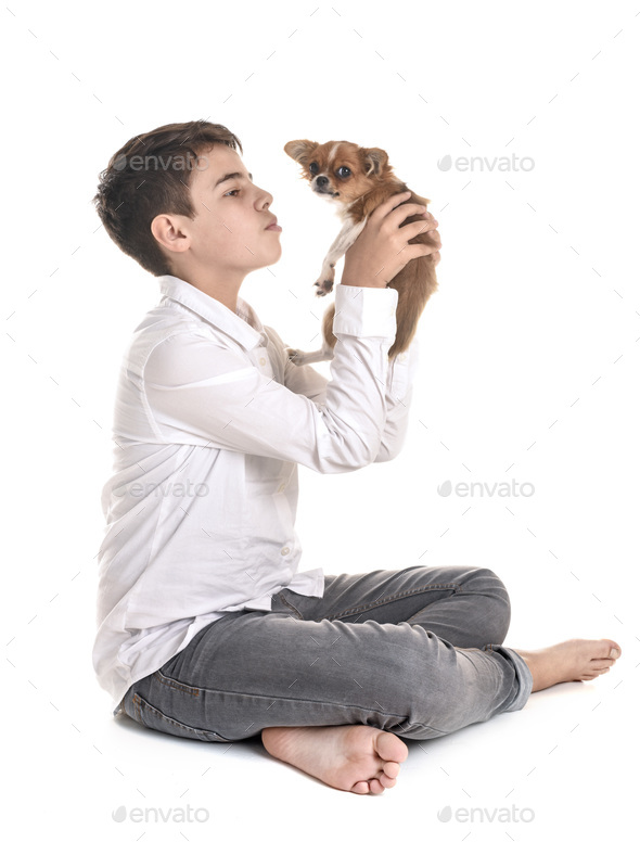 puppy chihuahua and teenager - Stock Photo - Images