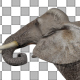 Elephant Eats - VideoHive Item for Sale