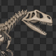Dinosaur Skeleton - VideoHive Item for Sale