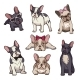 Puppies of French Bulldogs
