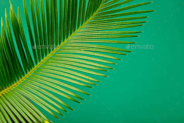 Summer green palm leave background - Stock Photo - Images