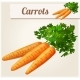 Carrots - GraphicRiver Item for Sale