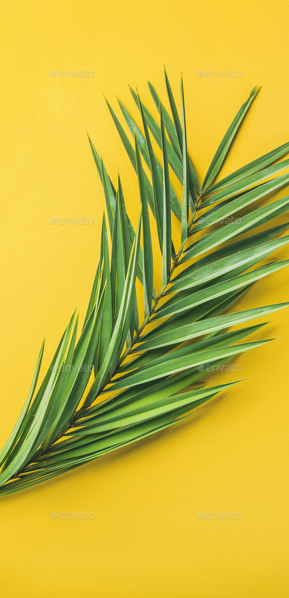 Green palm branches over yellow background, top view, narrow composition - Stock Photo - Images