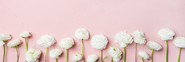 Saint Valentines Day background with ranunculus flowers, wide composition - Stock Photo - Images