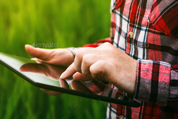 Female farmer using tablet computer in rye crop field - Stock Photo - Images