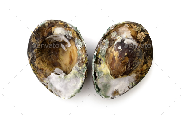 Rotten spoiled avocado isolated - Stock Photo - Images