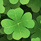 Clover Leaf Background - VideoHive Item for Sale