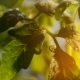 Big Drops of Rain Roll on Small Leaves of a Green Twig on a Sunny Day in Spring - VideoHive Item for Sale