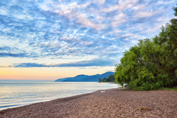 Willow on shore of Lake Baikal - Stock Photo - Images