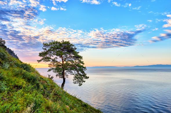 One pine on slope near Lake Baikal  - Stock Photo - Images