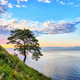 One pine on slope near Lake Baikal  - PhotoDune Item for Sale