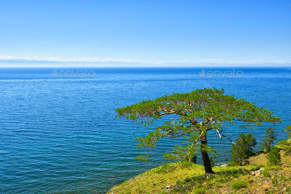 Tree on shore of Lake Baikal  - Stock Photo - Images