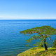 Tree on shore of Lake Baikal  - PhotoDune Item for Sale