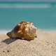 Beautiful Seashell on Ocean Sand Beach - VideoHive Item for Sale