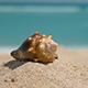 Beautiful Seashell on Ocean Sand Beach - VideoHive Item for Sale