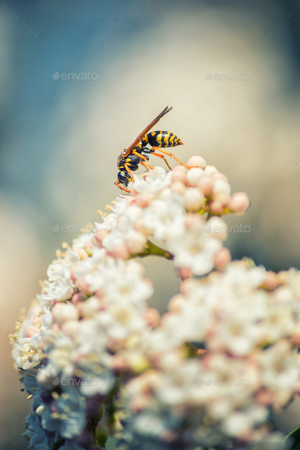 Wasp on flowers - Stock Photo - Images