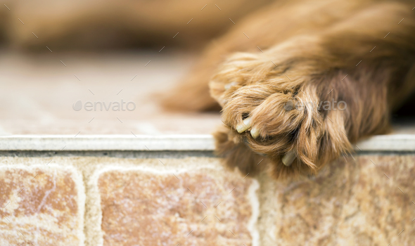 Dog paw web banner with copy space - Stock Photo - Images