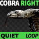 Cobra Right View Quiet - VideoHive Item for Sale