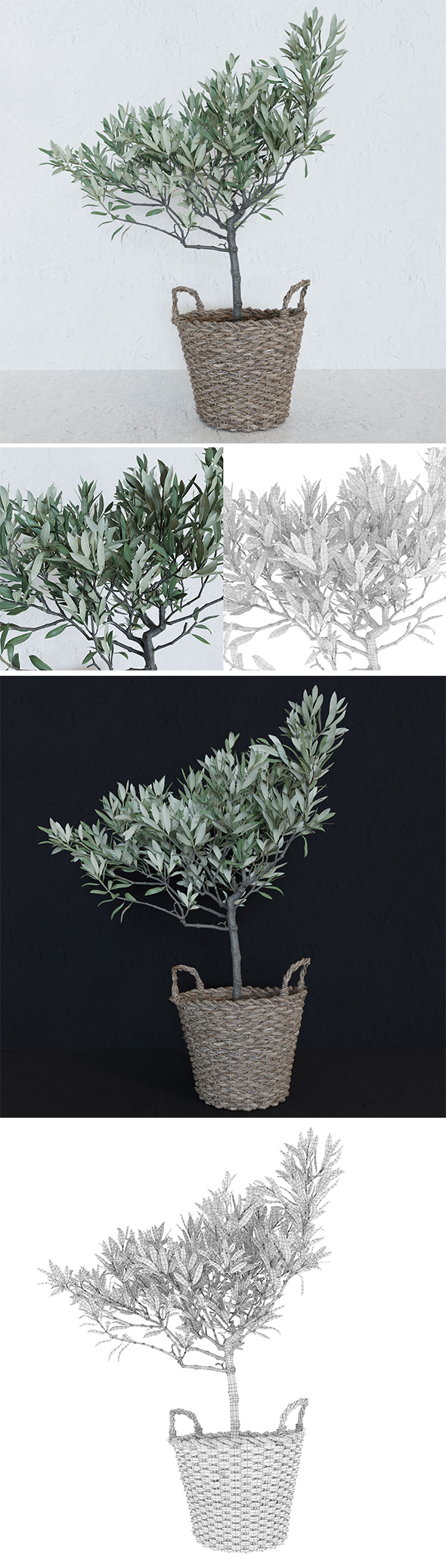 Olive tree in a  basket - 3DOcean Item for Sale