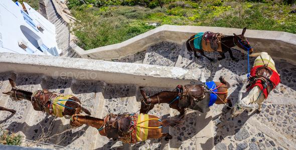 Santorini island, Greece - Donkeys at Fira village - Stock Photo - Images