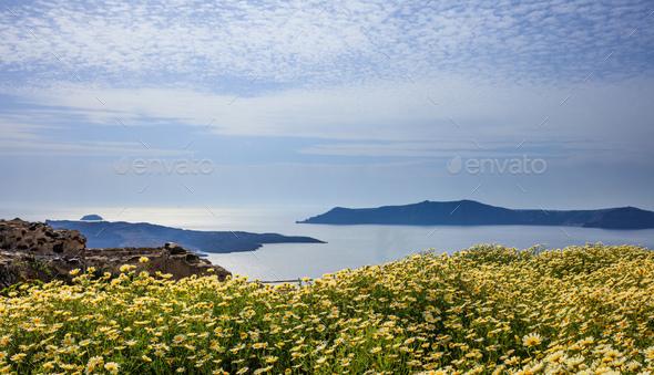 Flowers on the background of Nea Kameni - Santorini Greece - Stock Photo - Images