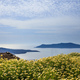 Flowers on the background of Nea Kameni - Santorini Greece - PhotoDune Item for Sale