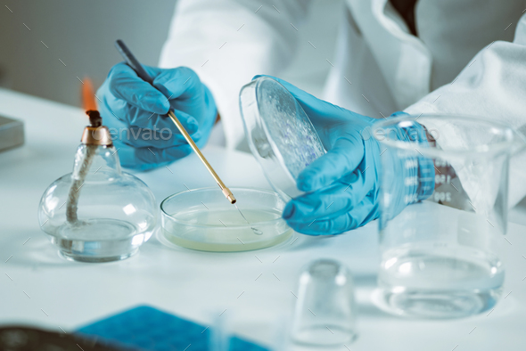 Microbiology laboratory work - Stock Photo - Images